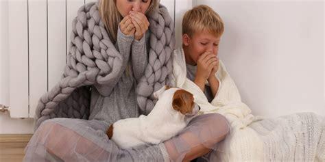 Heizkörper Wird Nicht Warm  Lösungen Und Tipps Theo