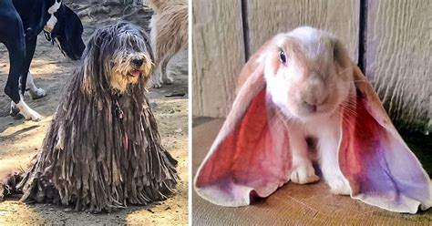 21 Animals So Ugly They re Actually Super Cute