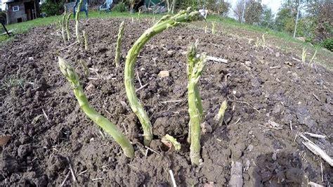 Kurzer Gartenrundgang Ende April, Oder Wie Ist Die Saison