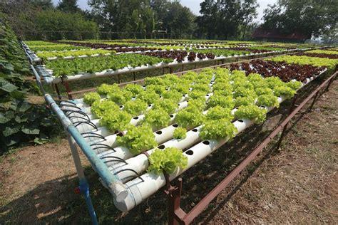 Hydroponic Gardening by Hydroponic Gardening Garden Ftempo