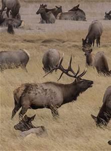 Wedding Plan Checklist Area Closures To Protect Plants Animals Rocky Mountain