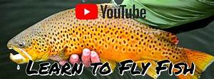 The, New, Fly, Fisher, Tv, Series, Video, Online, Magazine