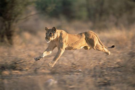 kenya james warwick wildlife photography