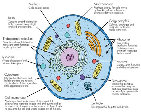 Diagram Part Of A Cell by Evolution Intelligent Design Lifes History