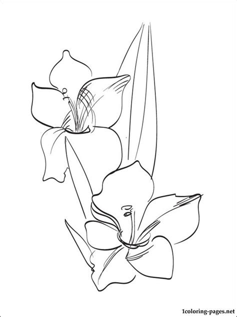 gladiolus coloring page  print  coloring pages
