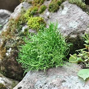 Mini Plante Artificielle : achetez en gros mini plantes artificielles en ligne des grossistes mini plantes artificielles ~ Teatrodelosmanantiales.com Idées de Décoration