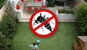 Mücken Im Haus Was Tun : 7 pflanzenarten die euch vor m cken sch tzen ~ Markanthonyermac.com Haus und Dekorationen