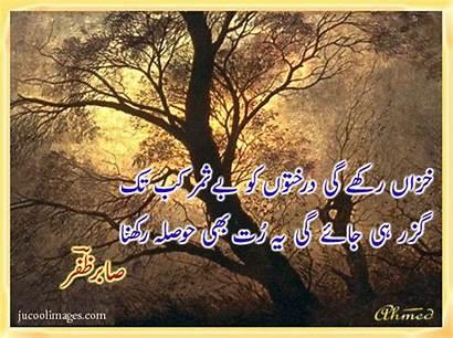 Urdu Poetry Trees Poems Funny Dosti Sad