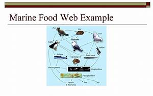 Ocean Food Web Examples Pictures to Pin on Pinterest ...