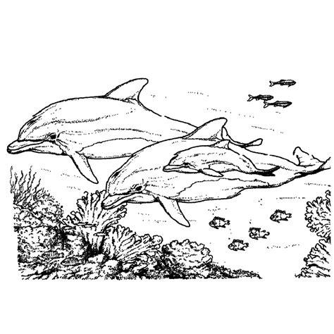 Dolfijnen In De Zee Kleurplaat by Leuk Voor Dolfijnen 0003