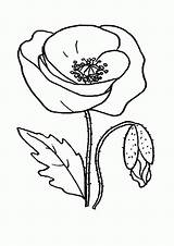 Poppy Coloring Flower Drawing Flowers Printable Clip Clipart Cliparts Lightning Bolt Line Library Popular Recommended Forget Golden A4 Coloringhome sketch template