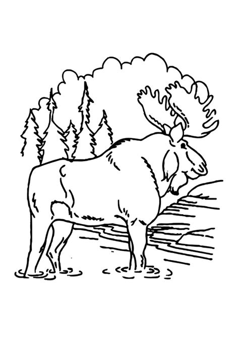 moose coloring pages moose and zee coloring pages az sketch coloring page