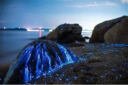 Bioluminescence Wallpapers