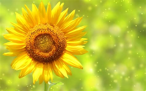 cool yellow backgrounds  images