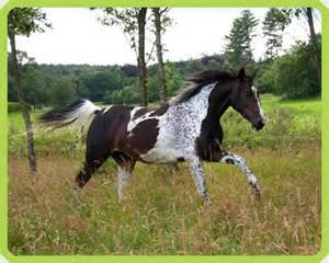 Rare Horse Colors