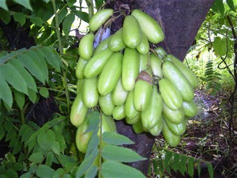 frutas cultivadas en venezuela