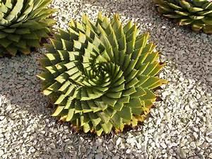 Plantes Grasses Intérieur : plantes grasses ext rieur conseils d 39 entretien et id es d co cactus pinterest plante ~ Melissatoandfro.com Idées de Décoration