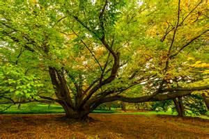 Morris Arboretum Tree