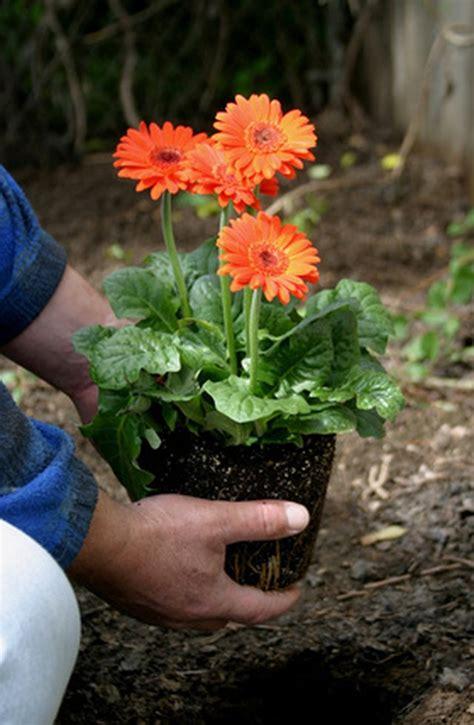 time  plant flowers  ohio hunker