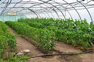 Gemüse Im Gewächshaus : unser csa abenteuer solidarische landwirtschaft auf hof ~ Articles-book.com Haus und Dekorationen