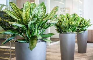 jenis tanaman hias indoor membuat ruangan lebih