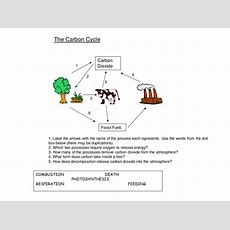 Nutrients The Carbon Cycle Worksheet By Harwooda  Teaching Resources Tes