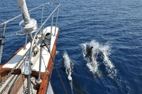 navigando tra i cetacei david ingiosi