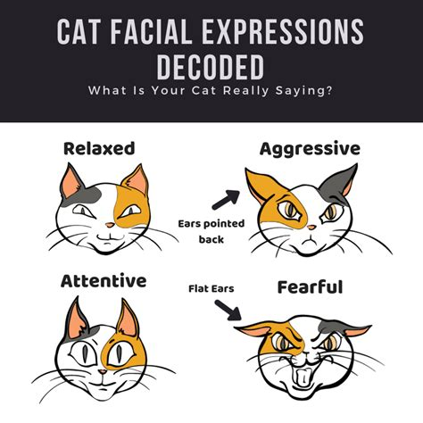 cat expressions facial bullying cats bully stop decode neighbor deterrents