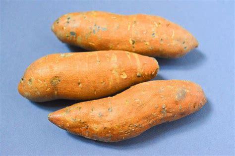 cuisiner les patates douces 17 meilleures id 233 es 224 propos de plante de patate douce sur culture des pommes de