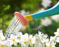 sognare fiori significato cosa significa sognare di annaffiare fiori e piante il