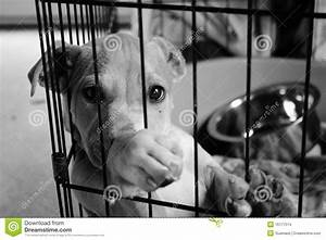 Sad Pup In A Cage Stock Images - Image: 16777074