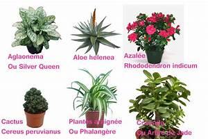 Plante Detoxifiante : plante de maison int rieur fleuriste bulldo ~ Melissatoandfro.com Idées de Décoration