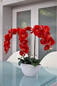 Gewächshaus Erde Wechseln : die besten 25 orchideen ideen auf pinterest ~ Whattoseeinmadrid.com Haus und Dekorationen