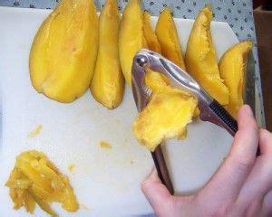 mango selber ziehen mangobaum selber ziehen mango z 252 chten mangopflanze