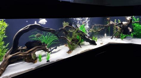 Aquascaping Inspiration by Aquascaping Inspiration Part 1 Bonsai Styles