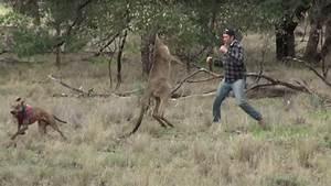 Here's A Guy Boxing A Kangaroo, Saving His Dog - CraveOnline