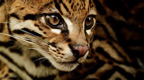 wildlife photography digital photo secrets