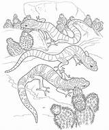Coloring Desert Pages Animals Printable Animal Colouring Adults Sheets Adult Gecko Reptiles Cartoon Kleurplaten Ausmalbilder Popular Coloringhome Realistic Books Voor sketch template