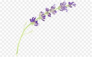 English Lavender Flower Watercolor Painting Clip Art