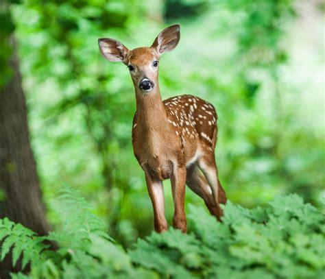 deer   identity   deer    garden