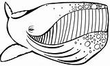 Coloring Pages Colouring Whale Humpback Animal Animals Whales Printable Side Fish Ocean Fresh Beach Wordpress sketch template