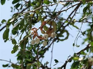 Panoramio - Photo of Guamuchiles
