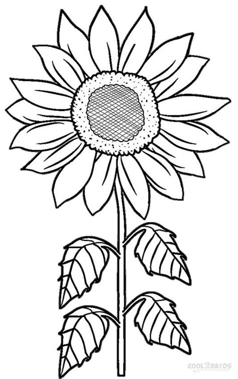 printable sunflower coloring pages  kids coolbkids