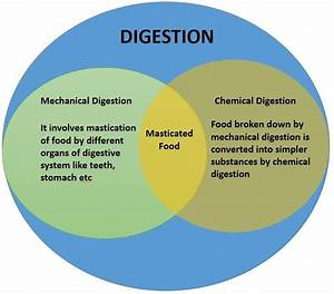 Compare And Contrast Mechanical And Chemical Digestion On
