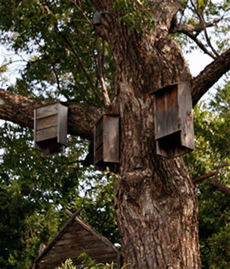 bat houses gardening solutions university of florida