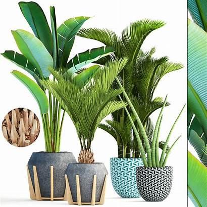Tropical Plants Plant Models Botanical Pot