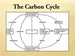 Diagram Carbon Cycle Examples