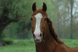 Bilder Von Pferden : mit pferden foto bild tiere haustiere pferde esel maultiere bilder auf fotocommunity ~ Frokenaadalensverden.com Haus und Dekorationen