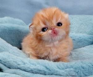 aren't they cute? - Cute Kittens Photo (10651708) - Fanpop