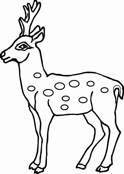 Deer Coloring Outline Pages Drawing Spotted Head